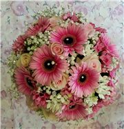 gerbera and gyp compact
