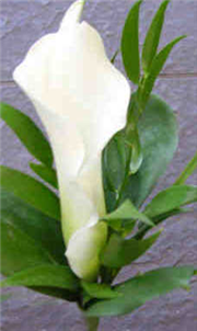 Gents Calla Lily Buttonhole