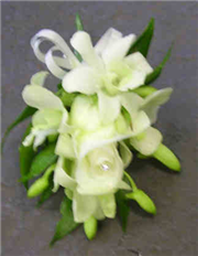 Cream Orchid Corsage